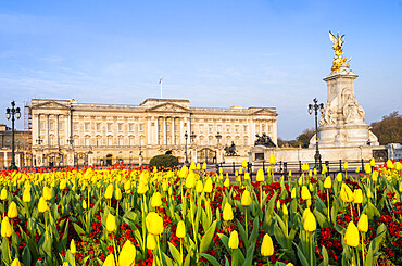 The facade of Buckingham Palace, the official residence of the Queen in London, showing spring flowers, London, England, United Kingdom, Europe