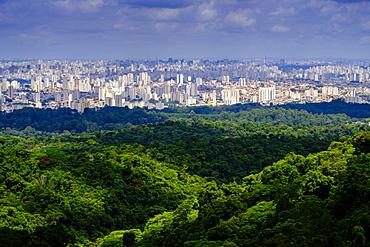 Central Sao Paulo from the rainforest of the Serra da Cantareira State Park, Brazil, South America