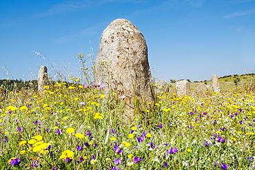 The standing stones at Xerez (Cromeleque do Xerez) (Xerez cromlech), Monsaraz, Alentejo, Portugal, Europe