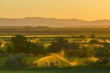 Sprinklers watering rural farmland