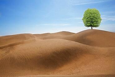 Tree growing in desert sand dunes