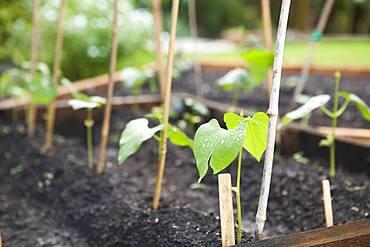 Seedlings growing in planters