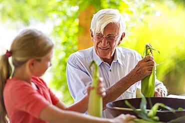Caucasian grandfather and granddaughter shucking corn