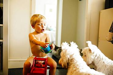 Mixed race boy playing with dogs on floor