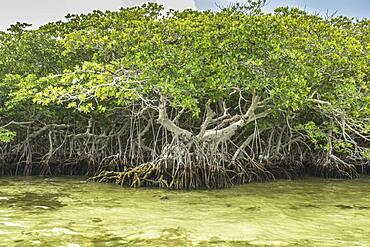 Tree growing in marshy swamp