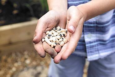 Caucasian boy holding black eyed peas in garden