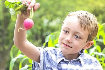 Caucasian boy holding radish in garden