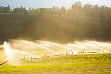 Irrigation system watering crops in farm field