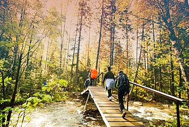 Backpackers hiking on bridge in forest
