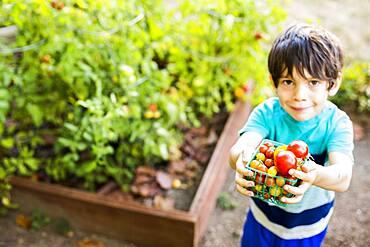 Mixed race boy picking vegetables in garden
