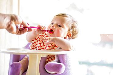Caucasian baby girl eating from spoon in high chair