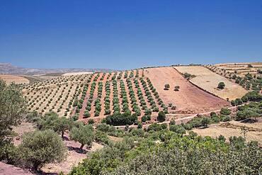 Aerial view of farm fields, Crete, Greece