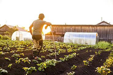 Mari farmer leaning on hoe in crop field