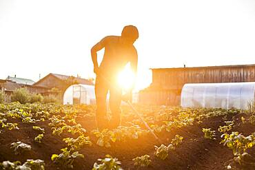 Mari farmer tending to crops in rural field