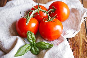 Tomatoes on vine with basil leaf