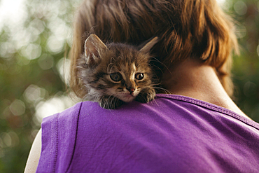 Face of cat sitting on shoulder of woman