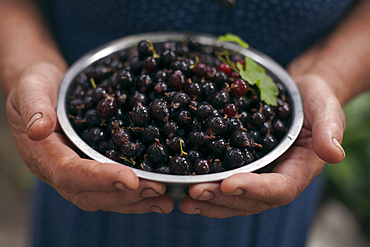 Hands holding bowl of berries