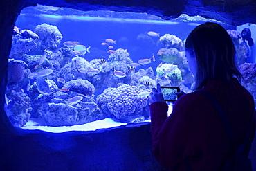 Caucasian woman photographing fish in aquarium