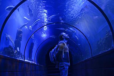 Caucasian man admiring fish in aquarium