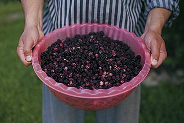 Hands holding bowl of blackberries