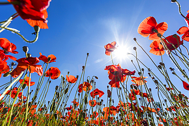 Sunshine on red flowers