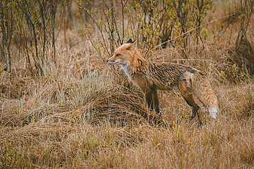 Fox standing in forest