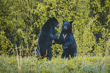 Bears standing in forest