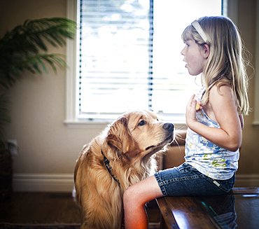 Curious dog sniffing food of Caucasian girl