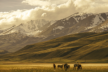 Horses in valley near mountains