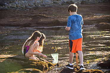 Caucasian boy and girls exploring tide pools with net