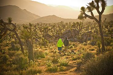 Distant boys walking in desert