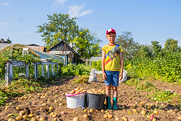 Caucasian boy standing on farm with buckets of potatoes