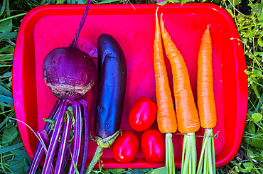 Organic vegetables on tray