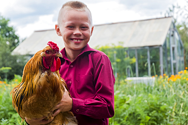 Caucasian boy holding rooster on farm