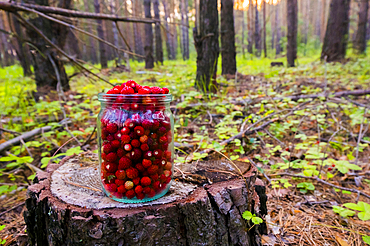 Jar of red strawberries on tree stump in forest