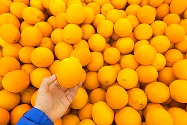 Hand holding oranges