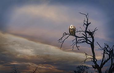 Bird perched on barren tree