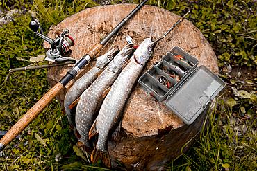 Fish and fishing rod on tree stump