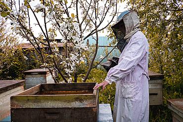 Beekeeper and bee hives