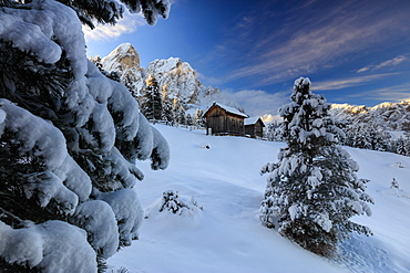 The snowy peak of Sass De Putia frames the wooden hut and woods at dawn, Passo Delle Erbe, Funes Valley, South Tyrol, Italy, Europe