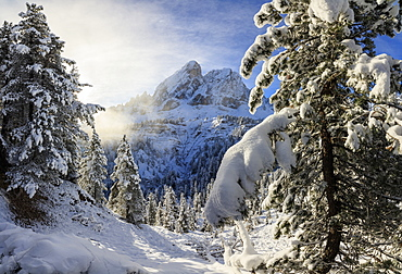 The sun illuminates the snowy trees and Sass De Putia in the background, Passo Delle Erbe, Funes Valley, South Tyrol, Italy, Europe - 1179-1426
