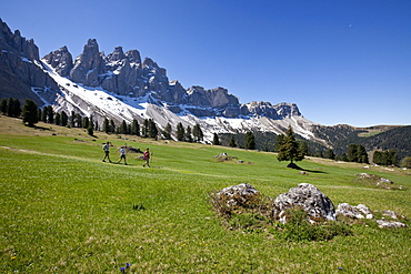 The Puez-Odle Nature Park, a very special place for nature lovers offering many hiking trails, peaks and flower fields, Funes, South Tyrol, Italy, Europe