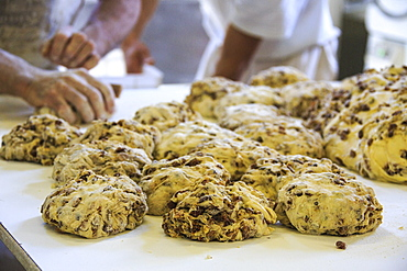 Preparing bisciola, typical bread of Valtellina, with raisins, walnuts and figs, Lombardy, Italy, Europe