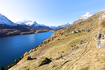 Colorful woods around Lake Sils and the mountain huts of Spluga, Sils, Maloja,  Canton of Graubunden, Swiss Alps, Switzerland, Europe