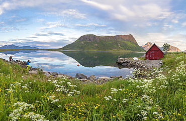 Flowers and grass frame the typical rorbu and peaks reflected in sea at night, Vengeren, Vagpollen, Lofoten Islands, Norway, Scandinavia, Europe