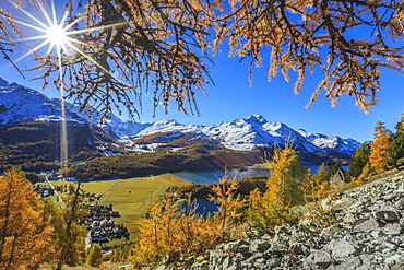 The sun shines through the branches of larch trees overlooking the village of Sils im Engadin with its famous lake, Engadine, Graubunden, Swiss Alps, Switzerland, Europe