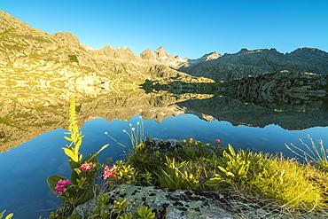 The rhododendrons frame the blue water of Lago Nero at dawn, Cornisello Pinzolo, Brenta Dolomites, Trentino-Alto Adige, Italy, Europe