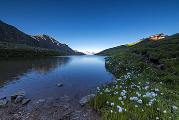 View of Rifugio Bozzi framed by cotton grass and blue lake, Val Di Viso, Camonica Valley, province of Brescia, Lombardy, Italy, Europe