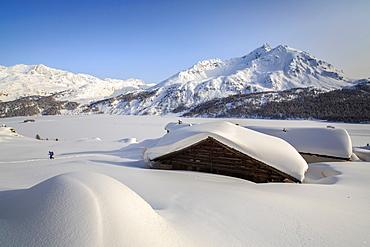 Some Spluga huts near the Maloja Pass submerged by meters of powder snow on a clear winter day, Graubunden, Swiss Alps, Switzerland, Europe