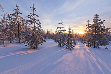 The lights of the arctic sunset illuminate the snowy woods, Vennivaara, Rovaniemi, Lapland region, Finland, Europe